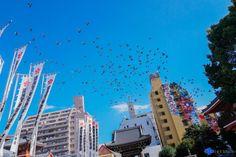 Birds that flocks together stays together by yumichwan.deviantart.com on @DeviantArt