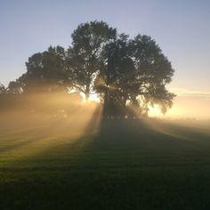 Het ochtendlicht is door Keline van Dijk prachtig vastgelegd. #Fotowedstrijd #Natuurmonumenten