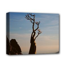 """Strong+Life+On+Top+Of+Mountain+Socotra+Deluxe+Canvas+14""""+x+11""""+(Stretched)"""