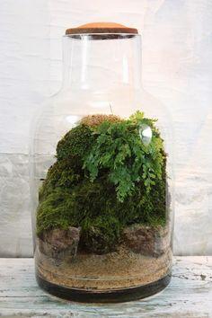 Beautiful, simple moss and foliage terrarium.