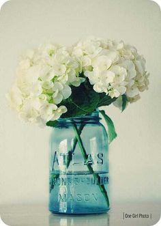 hydrangea and vintage jar