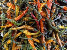 Stuffed Hot Peppers, Fleas, Shrimp, Carrots, Vegetables, Food, Essen, Carrot, Vegetable Recipes