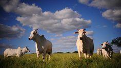 Demanda vai influenciar preços, mas abate pode retrair 9,3% se os preços dos animais de reposição continuarem elevados