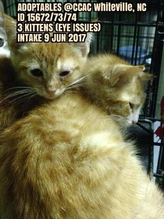 Pics For Fb, Kitten Eyes, Rescue Cats, Shelters, The Fosters, Kittens, Adoption, Social Media, Pictures