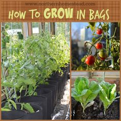How to grow in grow bags made of breathable fabric. It is the aeration that makes grow bags superior to other garden containers. Soil, water, fertilizing.