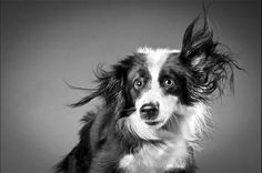 #NoticieroAnimal: Expresiones caninas que nunca antes había visto www.Nomasmaltratoanimal2.blogspot.com/2013/09/expresiones-caninas-que-nunca-antes.html