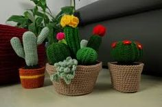 Znalezione obrazy dla zapytania kaktusy kompozycje