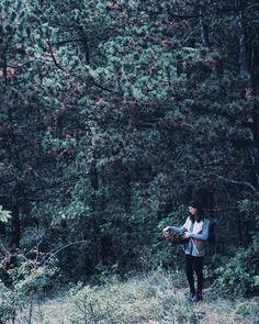 Autumn mood forest walk
