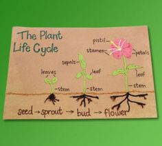 Plant life cycle science-projects
