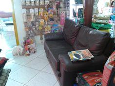 Outro ângulo da nossa sala de espera. Nossa gatinha Princesa verificando as revistas...