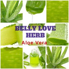 Belly Love Herb: Aloe Vera Soothes overactive digestive fire and is a gentle laxative.