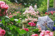 The courtyard planting at Kiftsgate Court in England epitomizes the ideal of the landscape rose garden.