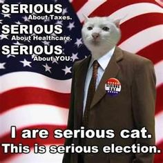 Election cat.