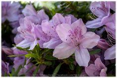 [2014 - Mateus, Vila Real - Portugal] #fotografias #flor #flores #flower #flowers