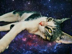 Universo gatuno