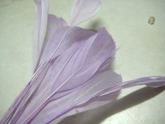 beautiful lilac goose nagoire feathers