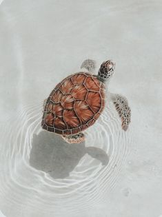 Baby Animals Pictures, Cute Animal Photos, Cute Pictures, Funny Animals, Happy Animals, Cute Turtles, Baby Turtles, Cute Wallpaper Backgrounds, Cute Wallpapers