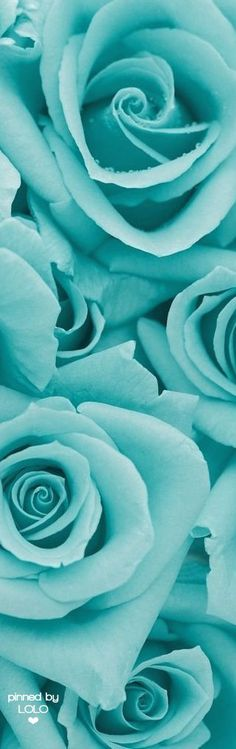 Pretty turquoise flowers for a fun summery wedding. Summer Wedding | Maternity Style | Maternity Summer Wedding | Summer | Wedding | Maternity Fashion | Turquoise | Teal | Aquamarine | Beautiful