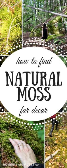 How to Find Natural Moss for Decor (and other crafty DIY uses!)   Home for the Harvest