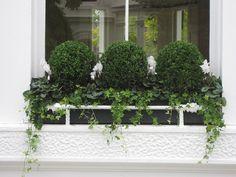 Window Box | Cyclamen, Box, Ivy...LOVE the iron rail infront