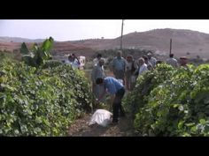 Greening the Desert by Permaculture | Positive Flower