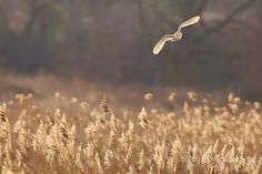 BBC Countryfile 'owl on the prowl'