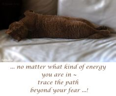 ... no matter what kind of #energy you are in ~ trace the path beyond your #fear ...!
