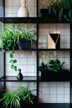 The Power of Plants in Modern Interior Design Home Improvement Cast, Home Improvement Contractors, Home Improvement Projects, Vases Decor, Plant Decor, Brown Couch Living Room, Japanese Home Decor, Wooden Shelves, Country Primitive
