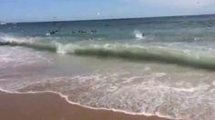 Rare Shark Feeding Frenzy at Cape Lookout National Seashore