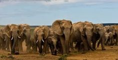 Garden Route Wildlife Tour From Explore South Africa Countries To Visit, Places To Visit, Elephant Park, Cute Baby Elephant, All About Animals, African Countries, Conservation, South Africa