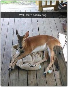 Funny Animal Pictures Of The Day 23 Pics Lustige Tierbilder des Tages 23 Pics – Funny Animals – Daily LOL Pics Humor Animal, Funny Animal Memes, Cute Funny Animals, Funny Animal Pictures, Funny Cute, Funny Shit, Funny Memes, Funny Dogs, Memes Humor