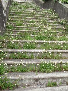 flowers on steps, design squish blog