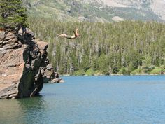 Swan Dive into our clear & cold lakes Canyon Ferry Lake