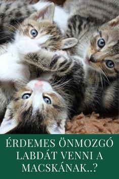 Macska   Cica   Kismacska   Kiscica   Labda Cats, Animals, Gatos, Animales, Animaux, Animal, Cat, Animais, Kitty