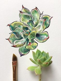 Image about love in art by ᵔᴥᵔ on We Heart It Arte Naturalista, Plant Sketches, Arte Sketchbook, Guache, A Level Art, Natural Forms, Ink Drawings, Art Inspo, Ink Art