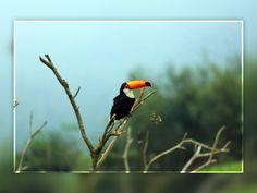 Uma biodiversidade incrível habita o nosso safári! ;) #lugardeserfeliz  http://portobelloresort.com.br/marina/