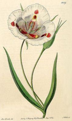 Resultado de imagen de botanic plant