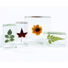 #PinIt2WinIt   This Plant Life Specimen Set would also be great for my students to discover and learn from!
