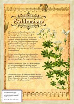 Waldmeister www. Healing Herbs, Medicinal Plants, Holiday Cocktails, Good To Know, Garden Plants, Natural Health, Herbalism, The Cure, Remedies