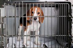 Crivella propõe criação de Estatuto dos Animais
