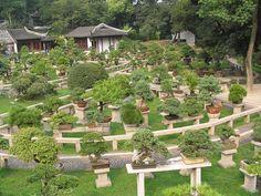 Bonsai nel giardino della pagoda Yunyan