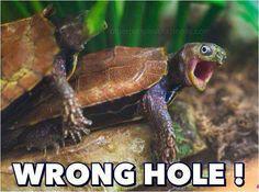 Turtle humor #sexhumor #turtles #humor