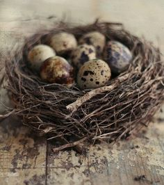 nest  ..Too complete to be seabird - can anyone i.d.
