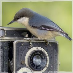 Joy of Photography
