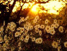 prettylittleflowers