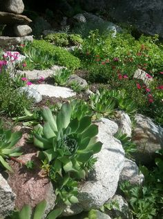 Plants, Home, Flora, Plant, Planting