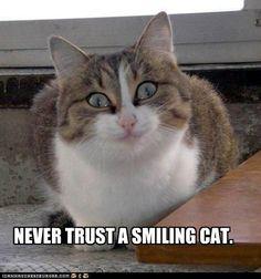 I Has a Suspicious...