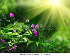 Garden Flower Sunshine Photos et images de stock Psalm 110, Psalms, Sunshine Photos, Christ Quotes, English Reading, My Lord, Faith In God, Word Of God, Jesus Christ