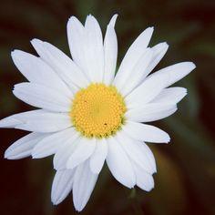 Flowers 4 #nature #gardening #flower