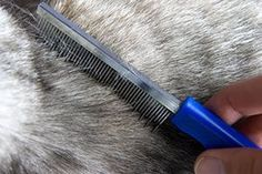 """Cat Brushing & Skin Care: Brushing your cat not only removes dirt, grease and dead hair from her coat, but it helps to remove skin flakes and stimulates blood circulation, improving the overall condition of her skin. One or two brushings per week will help kitty to keep her healthy glow and allow her to bask in yummy together time..."" (article) [www.ASPCA.org]"